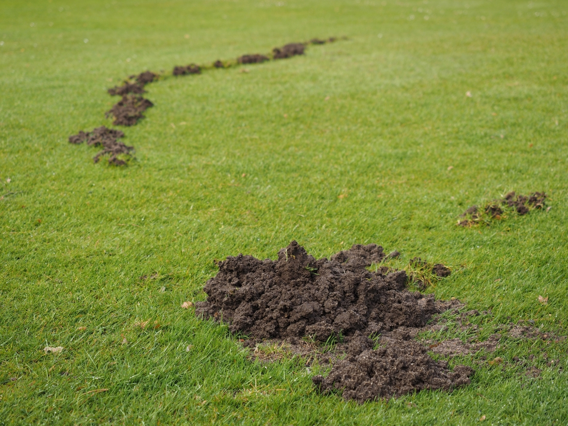Mole Damage